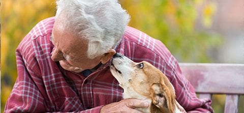 Animal Therapy for Dementia | Guidance Corner | Bridge to Better Living