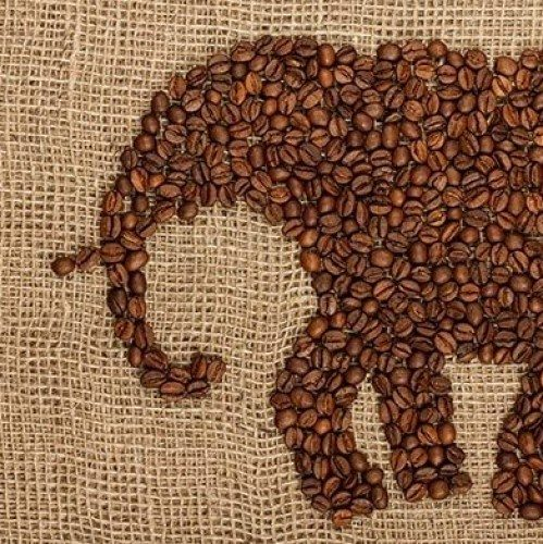 Coffee With An Elephant   Guidance Corner   Bridge to Better Living